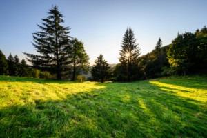 PPA a zelené zdroje